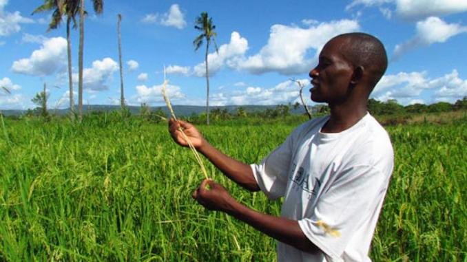 agriculture tanzanienne