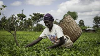 agriculture africaine
